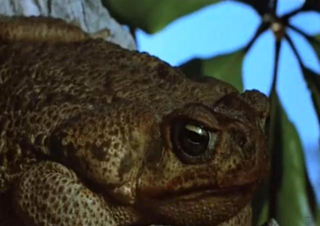 judgementalfrog