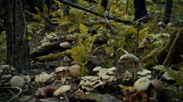 Eldon Stammets' (Aidan Devine) fungus garden.