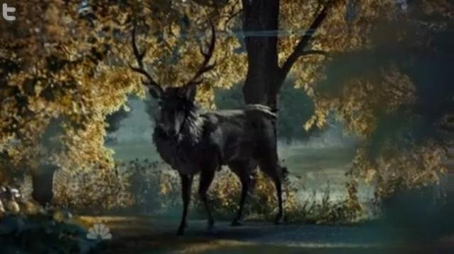 A closer look at the ravenstag.